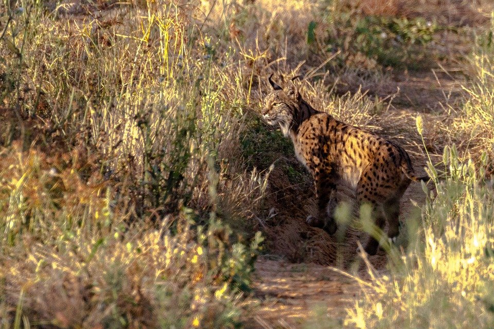 Especies en peligro de extinción: ¿qué animales salieron de la lista en 2020?