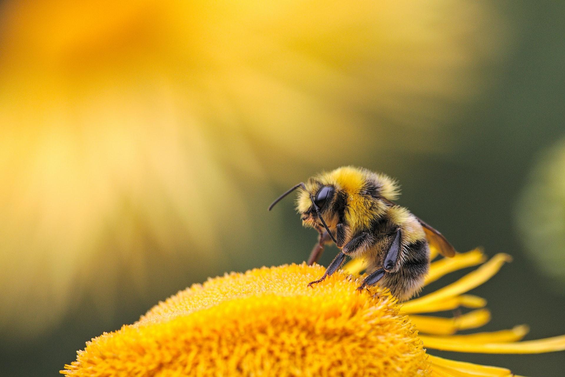 Paisajes diversos para mejorar la salud de la biodiversidad y de las personas